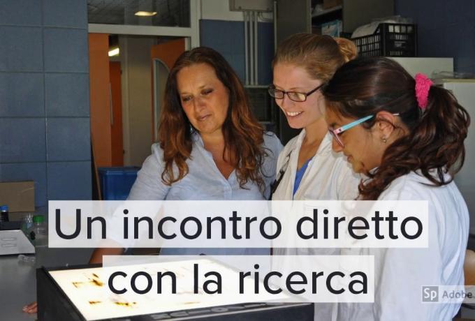 presentazione_dbcf